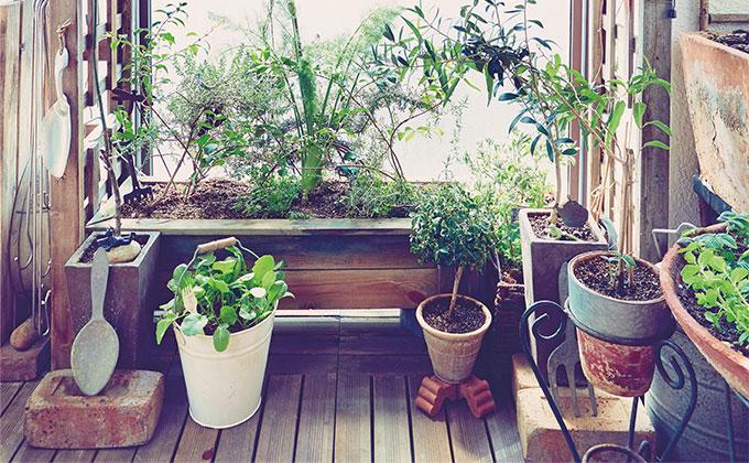 インテリアになる菜園づくり。見せ方のコツ【今日からはじめる、おうち菜園・1】