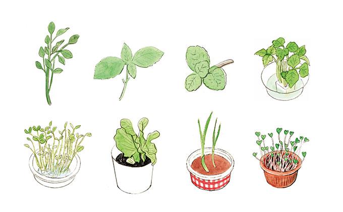 家計にもやさしいリサイクル野菜の育て方【今日からはじめる、おうち菜園・2】