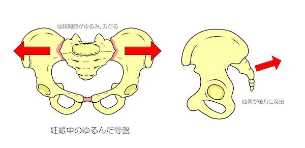 中 痛み 妊娠 股関節